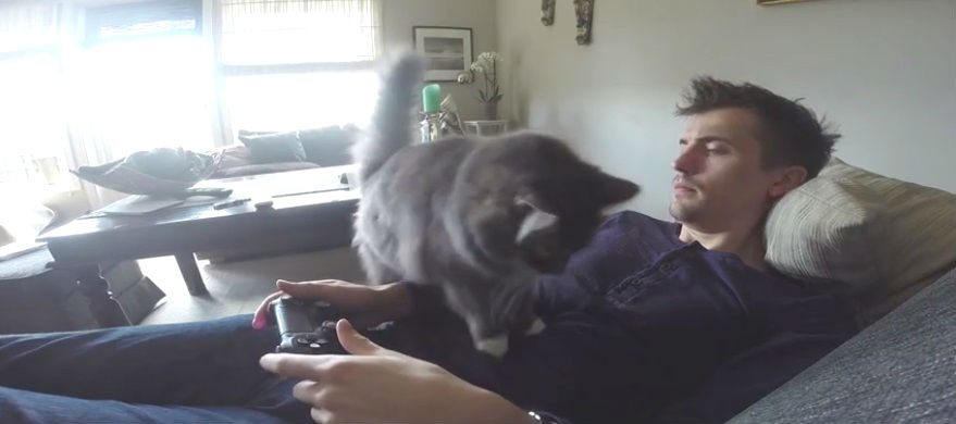 cat wants attention