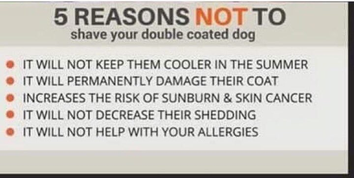 5 Reasons Not to Shave Your Double-Coated Dog