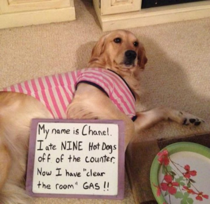 These Cute Pet Shaming Pictures of Misbehaving Animals are ...