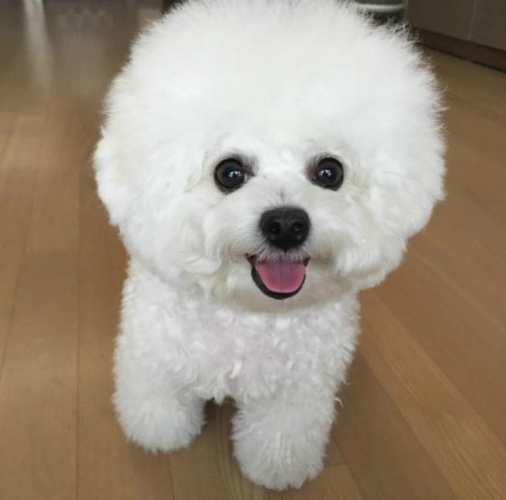 beautiful dog breeds
