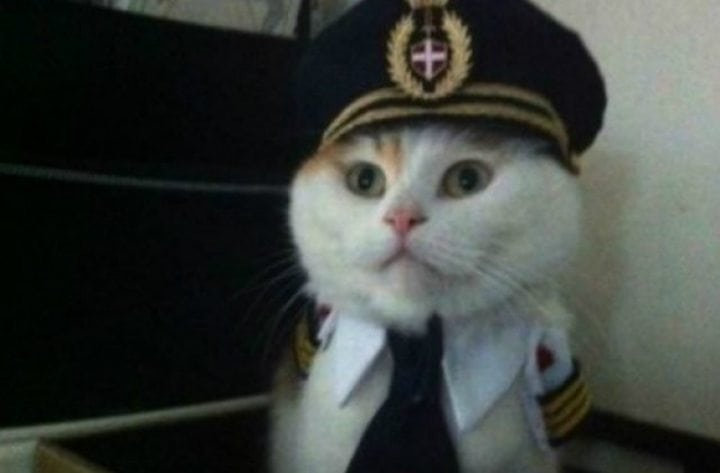 hilarious cats captain cute