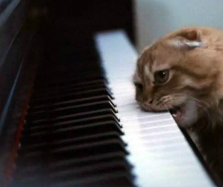 hilarious cats piano
