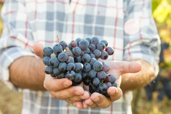 everyday super foods - grapes