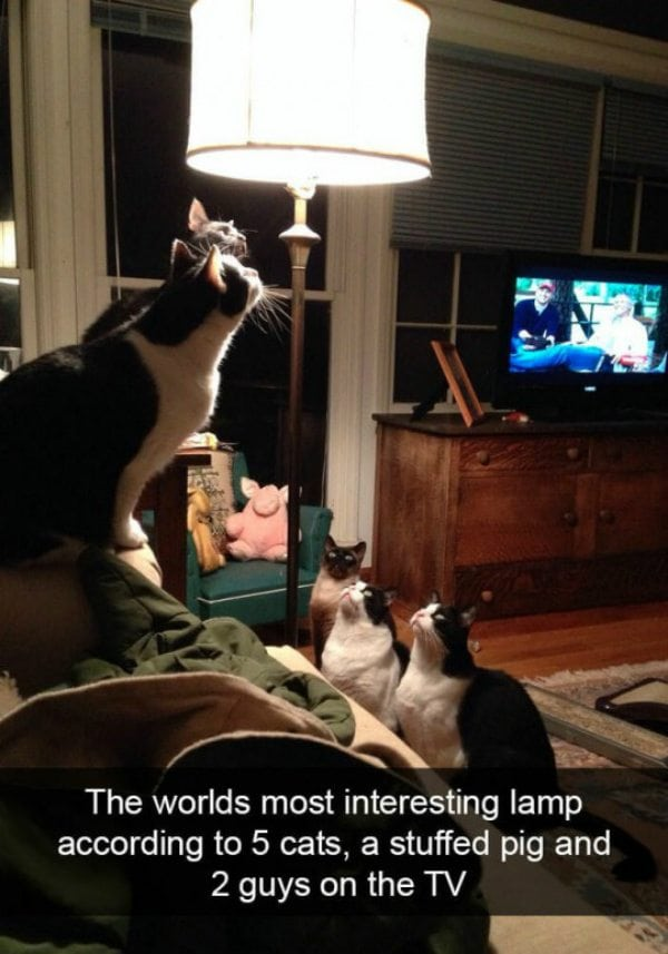 hilarious cats