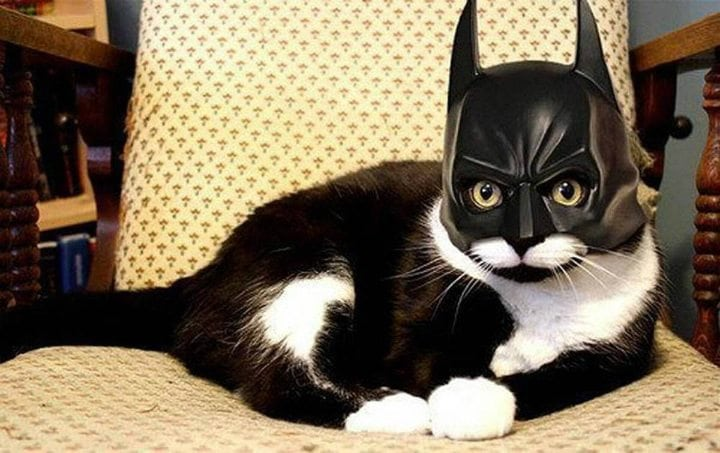 hilarious cats batman batcat cat costume