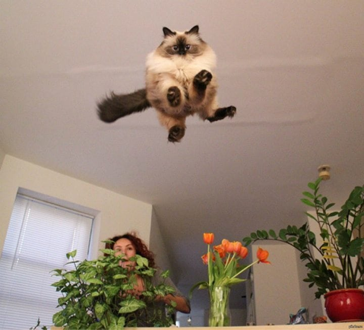hilarious cats hovercat