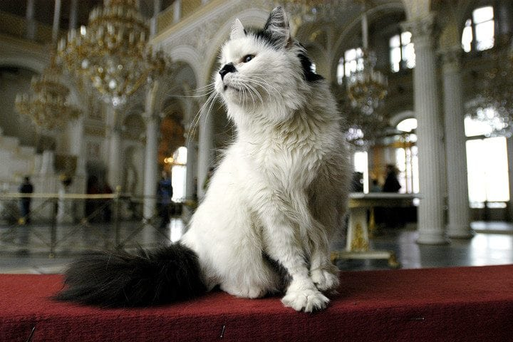 russia facts hermitage museum cats