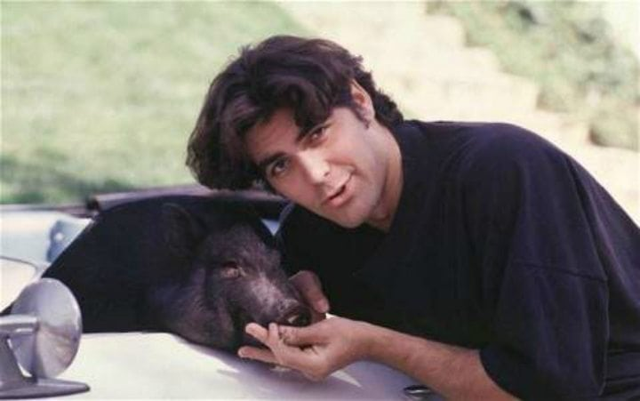 pampered pets - George Clooney