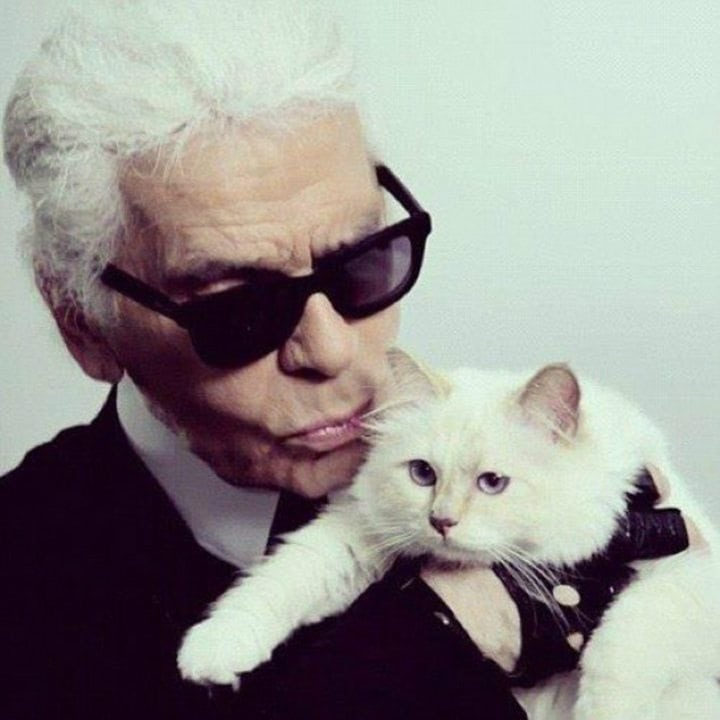 Karl Lagerfeld cat - pampered pets