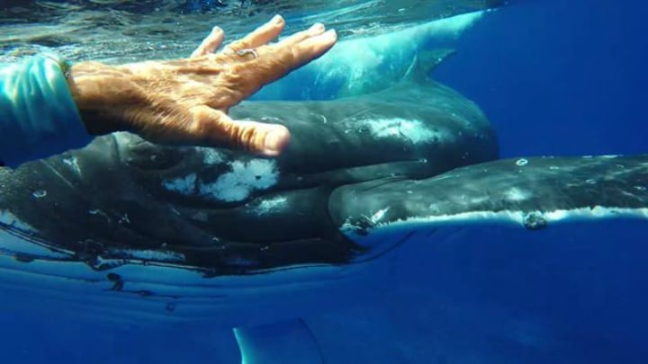 giant whale