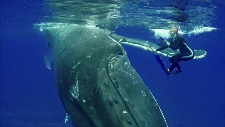 giant whale - diver rescue