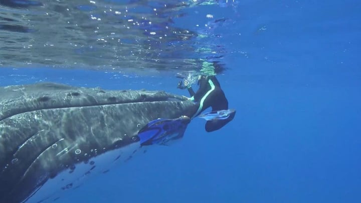 giant whale rescue