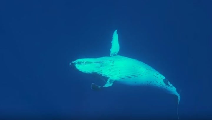 giant whale - shark attack